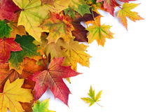 Border of colorful autumn maple leaves Royalty Free Stock Photography