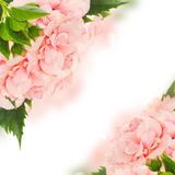 Border of colorful hibiscus flowers Stock Photography