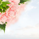 Border of colorful hibiscus flowers Stock Images