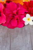 Border of colorful hibiscus flowers Royalty Free Stock Photography
