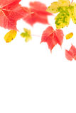 Border of colourful autumn leaves Stock Photography