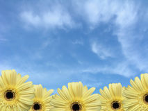 Border of Daisies Royalty Free Stock Photography