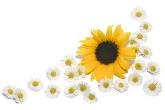 Border Daisies Sunflower. A border made of daisies and a sunflower stock photo