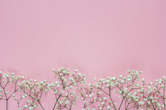 The border of delicate little white flowers on pink background f Stock Images
