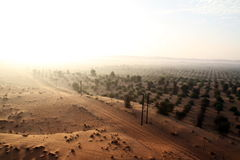 The border of the desert in the UAE. Royalty Free Stock Photo