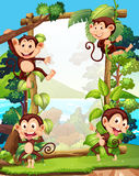 Border design with four monkeys Royalty Free Stock Photography