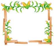 Border design with fresh corn Royalty Free Stock Image