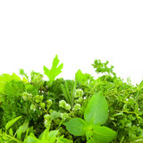 Border of Different Fresh Spice Herbs  over white background Royalty Free Stock Image