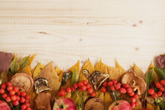 Border from dry colorful autumn leaves, dry and fresh mushrooms, fresh rose hips, rowan, apples on the wooden background. Royalty Free Stock Images
