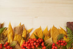 Border from dry colorful autumn leaves and fresh rowanberry on the wooden background. Stock Photo