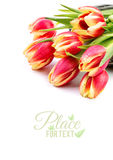 Border element for your spring design with red stripy tulips iso Stock Image