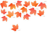 Border from falling maple leaves. Autumn decoration. Stock Photography
