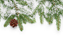 Border from fir twigs, cone and fake snow. On white background Stock Photography