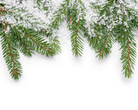 Border from fir twigs and fake snow. On white background Royalty Free Stock Image