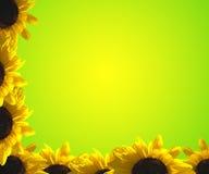 Border flower. A border of sunflower on green Royalty Free Stock Photos