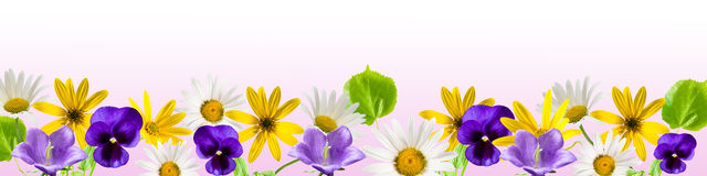 Free Border Flower Royalty Free Stock Photography - 19894487
