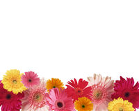 Border of flowers. With space for text Royalty Free Stock Photography