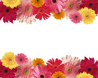 Border of flowers. With space for text Stock Image
