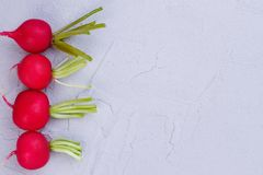 Border from four red radishes. Row of fresh organic red radishes on light background, copy space Royalty Free Stock Photo