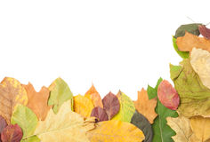 Border or frame of autumn fall leaves Royalty Free Stock Photo