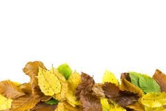 Border frame of autumn leaves Stock Images