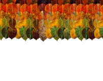 Border frame of autumn leaves on top. rainbow gradient from yellow orange brown green lie on each other in rows and columns. royalty free stock image
