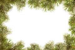 Border, frame from christmas tree branches stock images