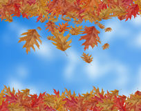 Border Frame of colored falling maple leafs with copy space on b Royalty Free Stock Images