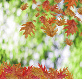 Border Frame of colored falling maple leafs with copy space on g Stock Photos