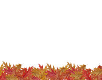 Border Frame of colored falling maple leafs with copy space isol Stock Image