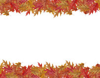 Border Frame of colored falling maple leafs with copy space isol Stock Photos
