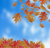 Border Frame of colored falling maple leafs with copy space on s Royalty Free Stock Photography