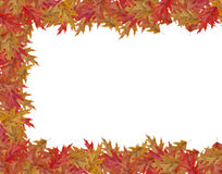 Border Frame of colored falling maple leafs with copy space on w Stock Photos