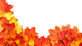 Border frame of colorful autumn leaves isolated on white.  stock images