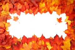 Border frame of colorful autumn leaves isolated on white.  Royalty Free Stock Photo