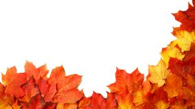 Border frame of colorful autumn leaves isolated on white. Border frame of colorful autumn leaves isolated on white royalty free stock image