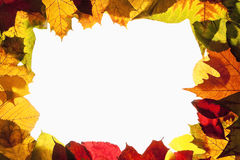 Border Frame of Colorful Autumn Leaves - Isolated on White Stock Images