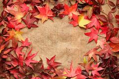 Border frame of colorful maple leaves. Rustic maple leaves on jute background Stock Photo