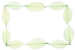 Border frame of green skeleton leaves on white Stock Photo