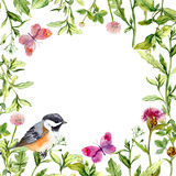 Border frame with meadow flowers, bird and butterflies. Watercolor Stock Photos