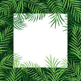 Border frame tropical palm leaf Stock Photos