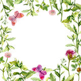 Border frame with wild herbs, meadow flowers and butterflies. Watercolor Royalty Free Stock Photo