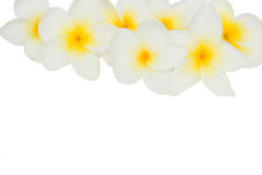 Border of frangipani flowers Stock Photo