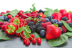 Border of fresh berries Stock Images
