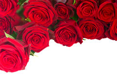 Border of fresh crimson red  garden roses Royalty Free Stock Photos