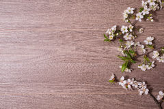 Border from fresh fragrant flowers cherry on retro background. Royalty Free Stock Photography