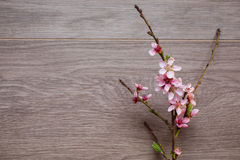 Border from fresh fragrant flowers cherry on retro background. Selective focus. Royalty Free Stock Image
