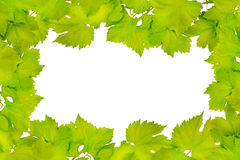 Border of fresh grape leaves Royalty Free Stock Photography