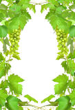 Border of fresh grapevine Royalty Free Stock Images