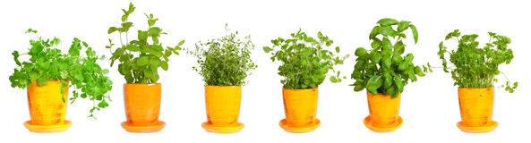 Border of fresh herbs. Assortment of herbs for prepare tasty food royalty free stock image